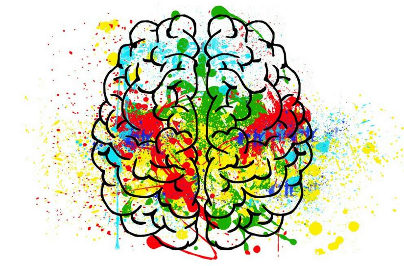 O cérebro pensativo e o cérebro reflexivo na Nova Medicina Germânica