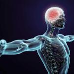 Conexão mente e corpo pela Germânica Heilkunde