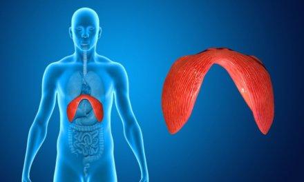 Hérnia diafragmática segundo a Medicina Germânica Heilkunde